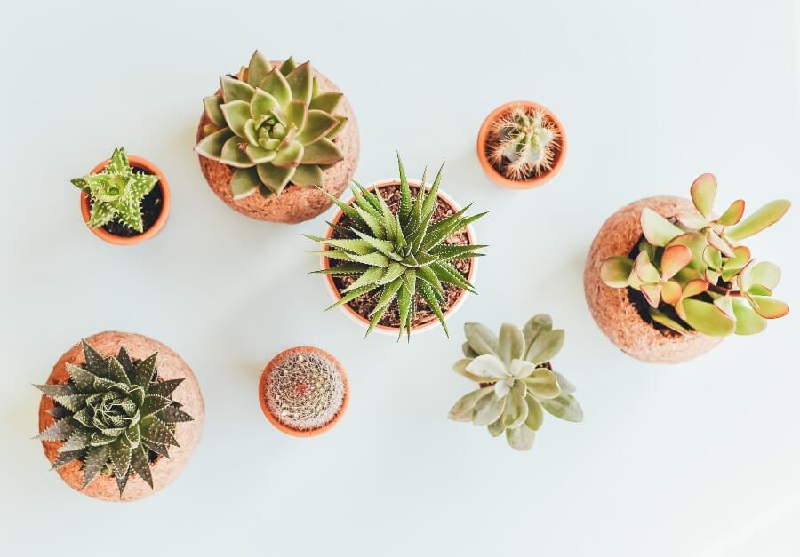 Email powitalny rośliny